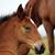 brown horse foal head portrait stock photo © goce