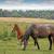 ló · csikó · nyár · testtartás · természet · mező - stock fotó © goce