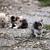 бездомным · кошек · еды · мяса · продовольствие · черный - Сток-фото © goce