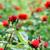 red roses flowers spring season stock photo © goce