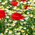 poppy and chamomile wild flowers spring season stock photo © goce