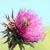 flores · flor · salud · planta · rosa · púrpura - foto stock © goce