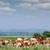 herd of cows on pasture stock photo © goce
