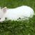 赤ちゃん · 白 · ウサギ · 草 · バニー · 食べ - ストックフォト © goce