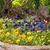 bloemen · tuin · voorjaar · natuur · blad · groene - stockfoto © goce