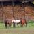 馬 · ファーム · ランチ · 納屋 · 自然 - ストックフォト © goce