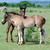 two horse foals on pasture stock photo © goce