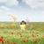 красивой · Полевые · цветы · луговой · весны · любви · природы - Сток-фото © goce