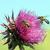 花 · ミツバチ · 黄色の花 · 蜂 - ストックフォト © goce