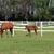 marrom · cavalo · potro · família · grama - foto stock © goce