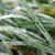 yeşil · ot · çiy · doğa · sezon · çevre - stok fotoğraf © goce