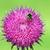 arılar · nektar · bahar · sezon · doğa - stok fotoğraf © goce