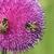 蜂 · 草原 · 春 · シーズン · 食品 · ボックス - ストックフォト © goce