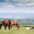 лошадей · кобыла · альпийский · вверх · гор - Сток-фото © goce