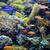 тропические · рыбы · коралловый · риф · синий · океана · воды · рыбы - Сток-фото © goce