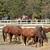 馬 · 食べ · 乾草 · ファーム · 日没 · 空 - ストックフォト © goce