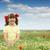 boldog · kislány · áll · színes · legelő · gyermek - stock fotó © goce