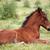 cute brown foal lying on grass stock photo © goce