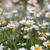 margaridas · prado · verde · primavera · tempo - foto stock © goce