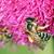 arı · nektar · bahar · sezon · doğa - stok fotoğraf © goce