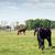 馬 · ランチ · 2 · 明るい · 夏 - ストックフォト © goce
