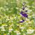 Blue · Sky · красивой · Purple · цветы · луговой · весны - Сток-фото © goce