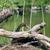 black swan lying on nest stock photo © goce