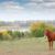 коричневый · кобыла · области · лошади · Фермеры · пастбище - Сток-фото © goce