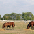 foals and horses eat hay in corral ranch scene stock photo © goce