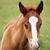 cute brown foal portrait stock photo © goce