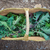 basket of freshly picked egological kale stock photo © godfer