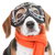 dog wearing flying glasses or goggles stock photo © godfer