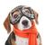 tazı · tazı · köpek · portre · sevimli · bakıyor - stok fotoğraf © godfer