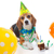 kutya · születésnapi · buli · kalap · léggömbök · ül · kutyakölyök - stock fotó © godfer