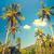 szép · út · pálmafák · kék · ég · felhő · tájkép - stock fotó © goinyk