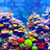 Cingapura · aquário · peixe · tropical · luz · solar · natureza - foto stock © goinyk