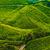 tea · ültetvény · tájkép · Föld · hegy · nyár - stock fotó © goinyk