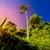 Sternenhimmel · einsamen · Baum · Silhouette · Himmel · Natur - stock foto © goinyk