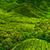 çay · tarla · dağlık · ahşap · manzara · yaz - stok fotoğraf © goinyk