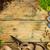 ツール · 植物 · 園芸用具 · 木材 · コピースペース · 花 - ストックフォト © goir