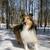 公園 · 見える · かなり · 犬 - ストックフォト © Gordo25