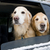 golden · retriever · carro · dourado · ar · fresco · aventura - foto stock © Gordo25