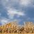 bouw · hout · groot · gebouw · exemplaar · ruimte · blauwe · hemel - stockfoto © Gordo25