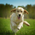 jóvenes · feliz · perro · golden · retriever · alegría · rápidamente - foto stock © goroshnikova