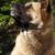 groot · hondenras · vergadering · zwarte · studio · honden - stockfoto © goroshnikova