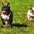 iki · köpekler · çalışma · dışında · mutlu - stok fotoğraf © goroshnikova