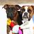 casal · dois · cães · amor · perder · juntos - foto stock © goroshnikova