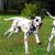 çalışma · köpekler · üç · iki · yavru · bir - stok fotoğraf © goroshnikova