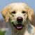 köpek · portre · güzel · gülen - stok fotoğraf © goroshnikova