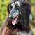 hond · mooie · jachthond · naar · leuk · ogen - stockfoto © goroshnikova